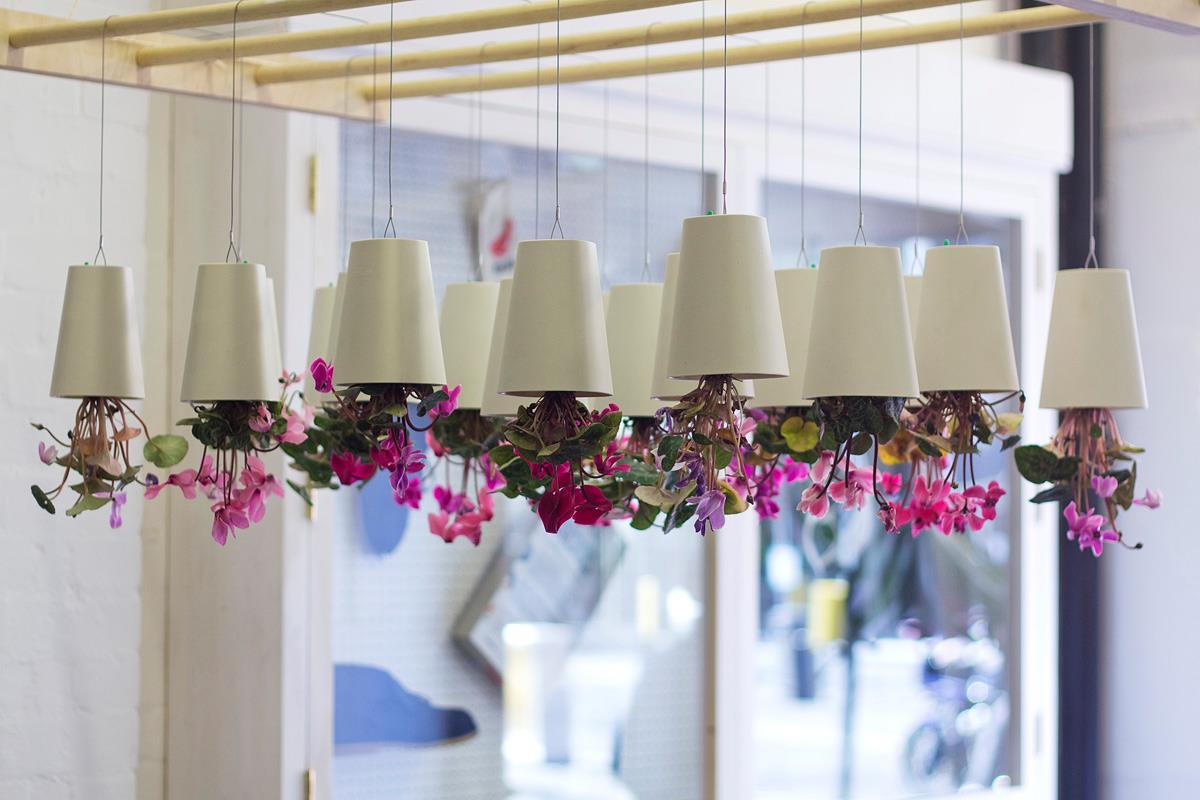 Фото как подвесить цветы на потолке